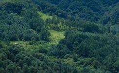 Galicia se dispone a fumigar las plagas de gorgojo del eucalipto con productos altamente tóxicos