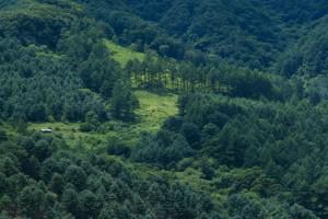 Eliminacion gorgojo del eucalipto