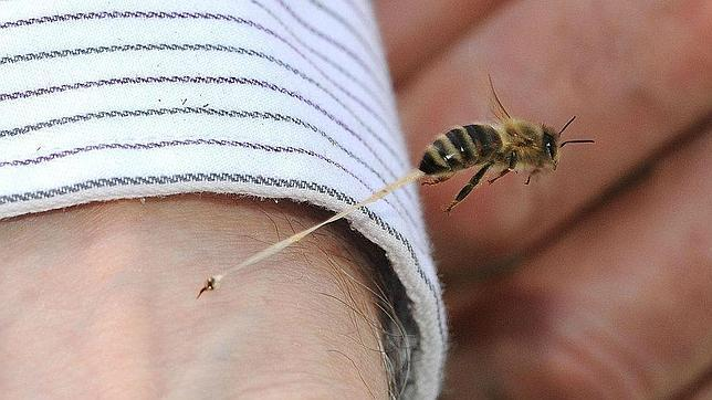 Fotografía del momento de la picadura de una abeja