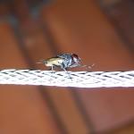 cómo ahuyentar a las moscas