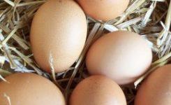 Salmonella, intoxicación alimentaria más frecuente en verano