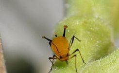 Los insectos también realizan el proceso de la fotosíntesis