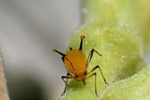 Comportamiento de los insectos