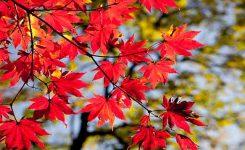 Principales plagas del otoño
