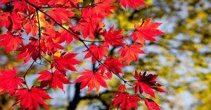 Cuáles son las plagas de otoño