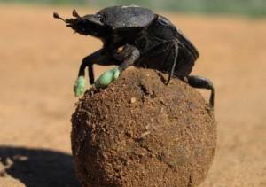 Comportamiento de insectos