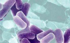 La bacteria E. Coli modifica su organismo para colonizar frutas y verduras