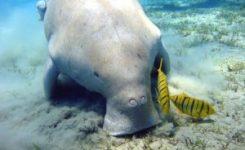 ¿Qué condiciones promueven la extinción de animales marinos?