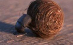 El escarabajo pelotero se orienta observando la Vía Láctea