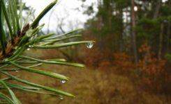 Vídeo de erradicación del nematodo del pino en Extremadura