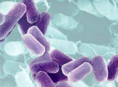 Control de legionelosis en los biocidas