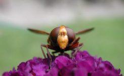 Remedios caseros contra picaduras de insectos