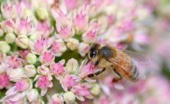 La alergia a las picaduras de insectos se incrementa, afectando a un 5% de la población