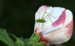 Gerona elimina las plagas del municipio mediante lucha biológica