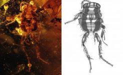 Las cucarachas eliminaban los excrementos de los dinosaurios