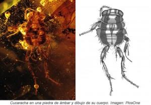 fósil de cucaracha en ambar descubren que eliminaban heces de cucarachas