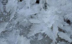 Eliminar las chinches de cama por congelación