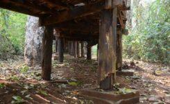 Las carcomas y termitas consideradas peligrosas plagas en la madera