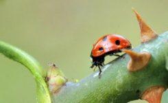 Detectar y eliminar pulgones de las plantas