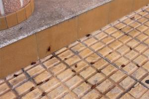 Plagas de cucarachas en Cáceres