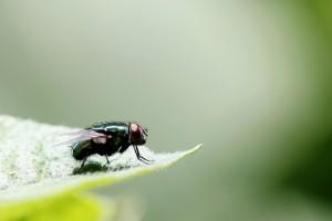 Cómo hacer trampas caseras para moscas