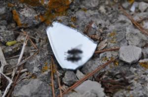 Consejos de prevención de las plagas de moscas