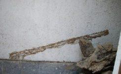 Cómo identificar la presencia de termitas
