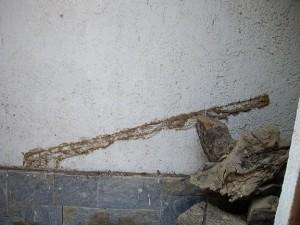 termita en casa