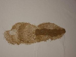 termita en la pared de casa