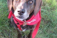 Cómo prevenir la leishmaniasis en perros