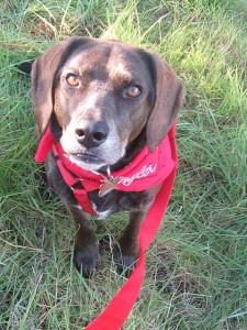 collares contra leishmaniasis en perros