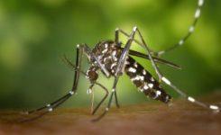 ¿Qué es el virus zika transmitido por el mosquito tigre?