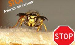 Advertimos de plagas de insectos en verano. ¿Cómo frenar el problema?