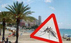 Aumenta la presencia de mosquito tigre en Alicante