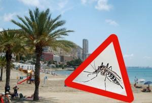presencia de mosquito tigre en alicante