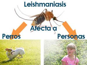 leishmaniasis afecta a perros y personas
