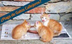 ¿Cómo Combatir una Plaga de Gatos?