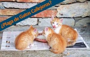 son los gatos callejeros una plaga