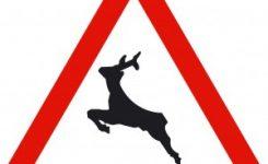 30 millones de animales mueren atropellados en España