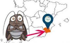 Las cucarachas son la plaga más abundante en Murcia