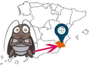 plagas de cucarachas en Murcia son las más abundantes