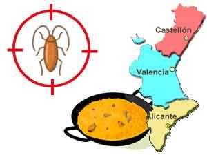 Plagas de cucarachas en la Comunidad Valenciana