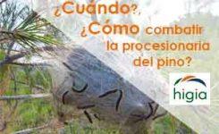 ¿Cuándo y cómo combatir la procesionaria del pino?