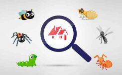 ¿Qué daños ocasionan los insectos del hogar?