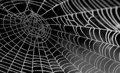 Insecticida de veneno de araña contra las plagas de cultivo