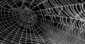 insecticida de veneno de araña