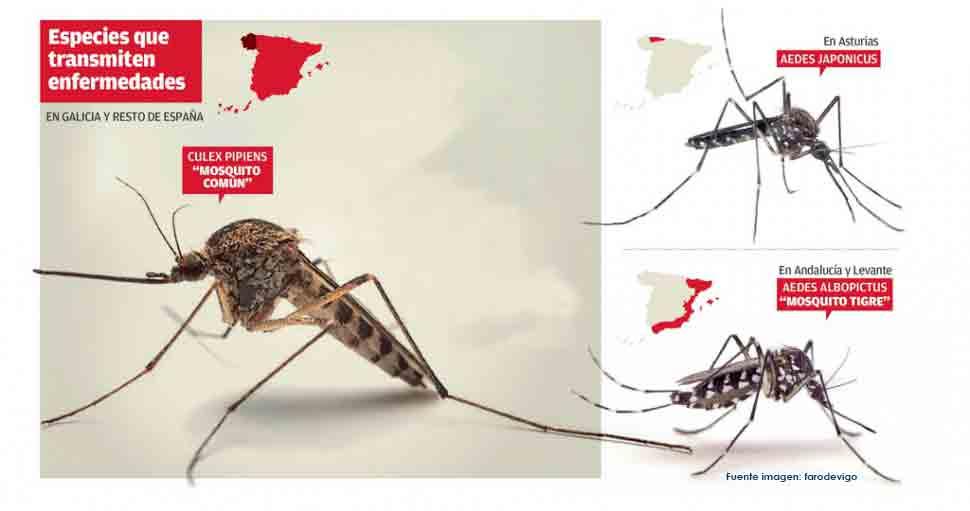 mapa origen expansión mosquito común Culex en España